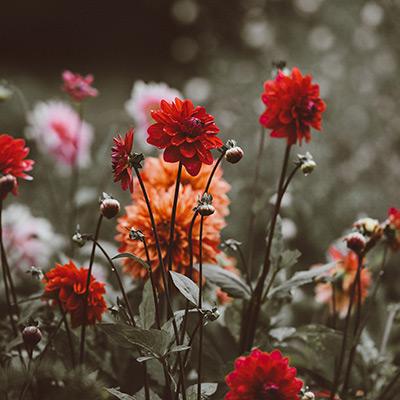riego jardin